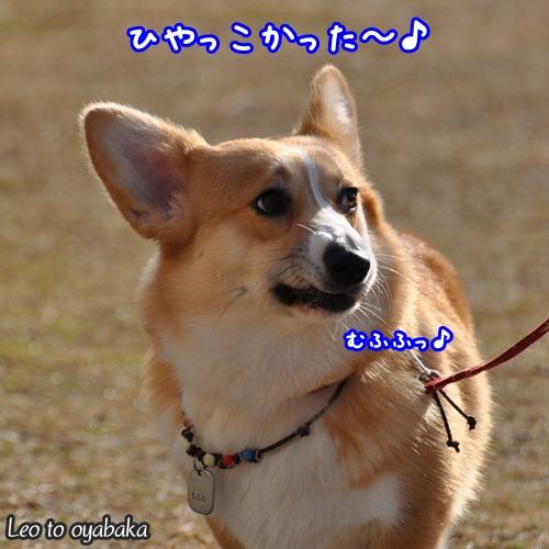 ひやっこかった〜♪.jpg