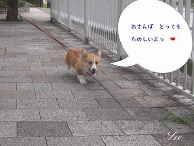 お散歩楽しいのねっ.jpg