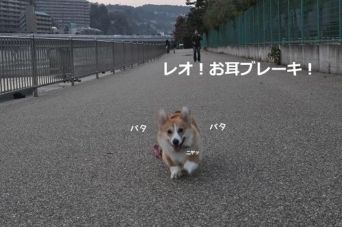 お耳ブレーキ!.jpg