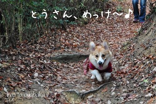 とうさん、めっけ〜♪.jpg