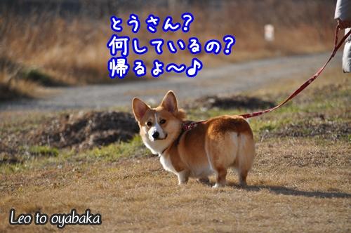 とうさん、帰るよ〜♪.jpg