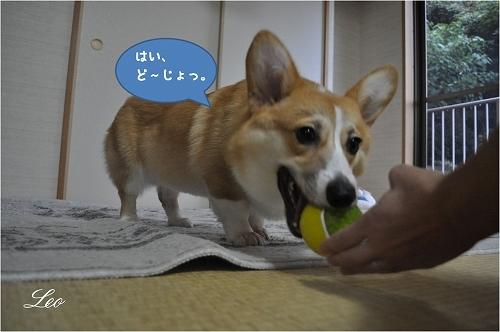 はいどうじょ.jpg