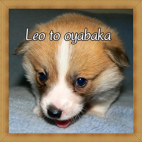 ぼく、レオだよっ♪.jpg