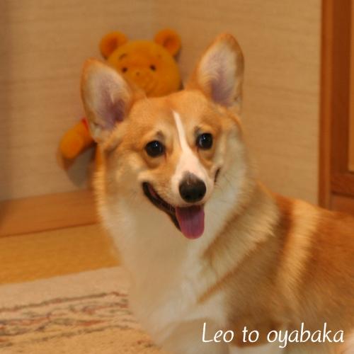 ぼくレオだよっ♪.jpg