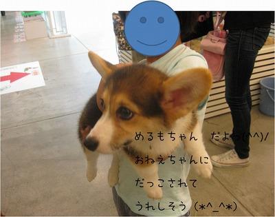 めるもちゃん.jpg