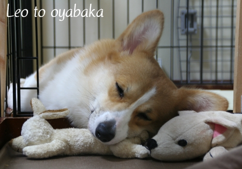 よかったね、おやすみっ♪.jpg