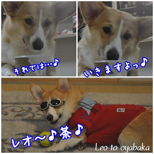 レオ茶変身♪.jpg