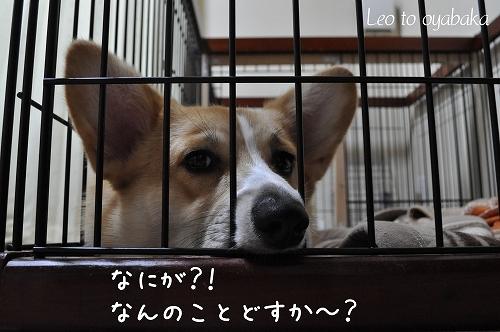 何のことどすか〜?.jpg