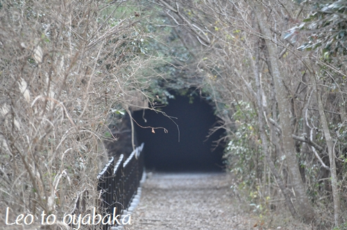 素敵なトンネル.jpg