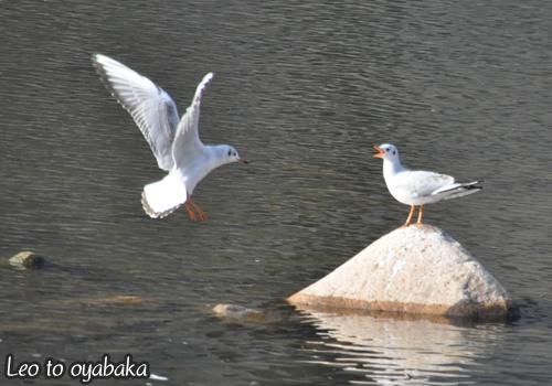 鳥さんたち2.jpg