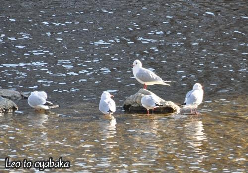 鳥さん家族.jpg