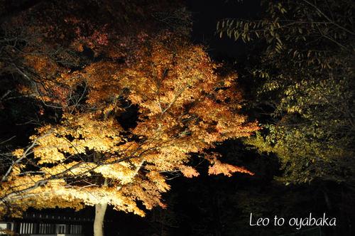 鷲林寺3.jpg
